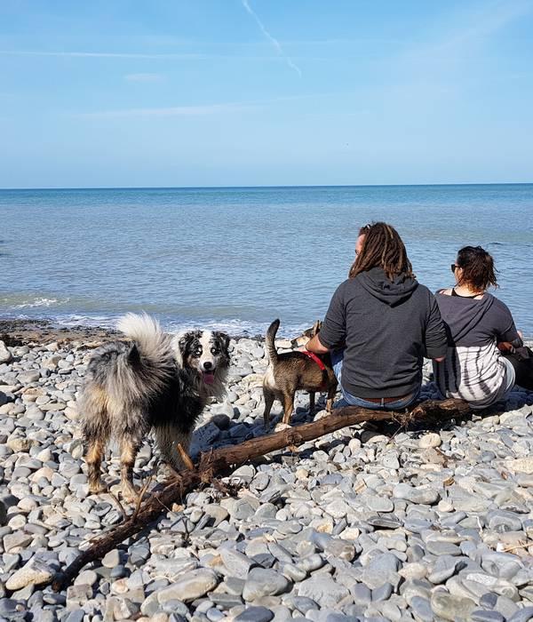 Voyagez malin avec votre chien !