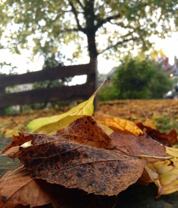 10 petits plaisirs d'automne !