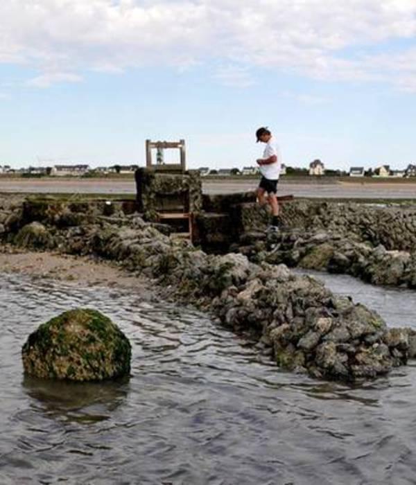 Un bulot du jurassique retrouvé dans la pêcherie de Jullouville !