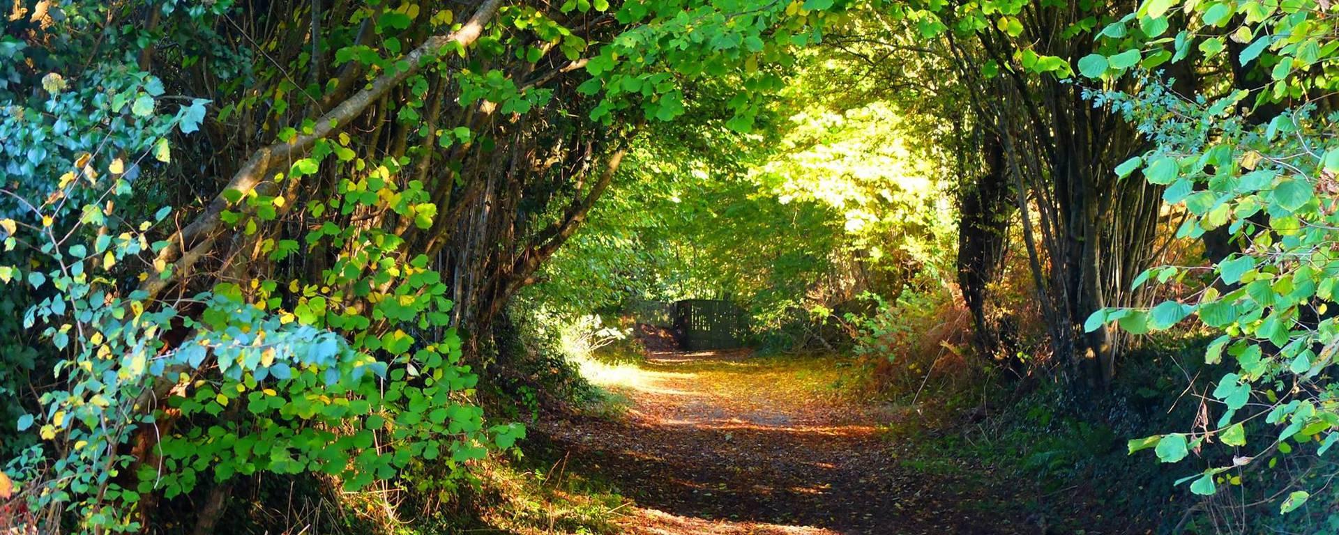 Forêt de Saint-Michel-des-Loups. Jullouville.