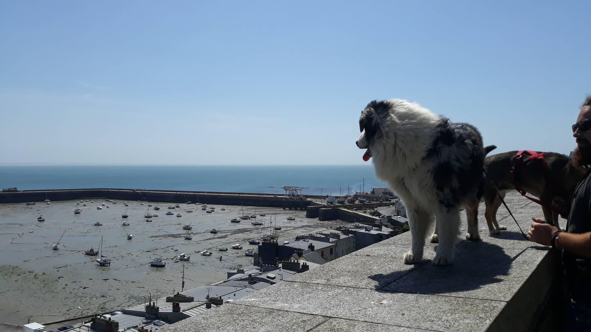 vue port granville chien