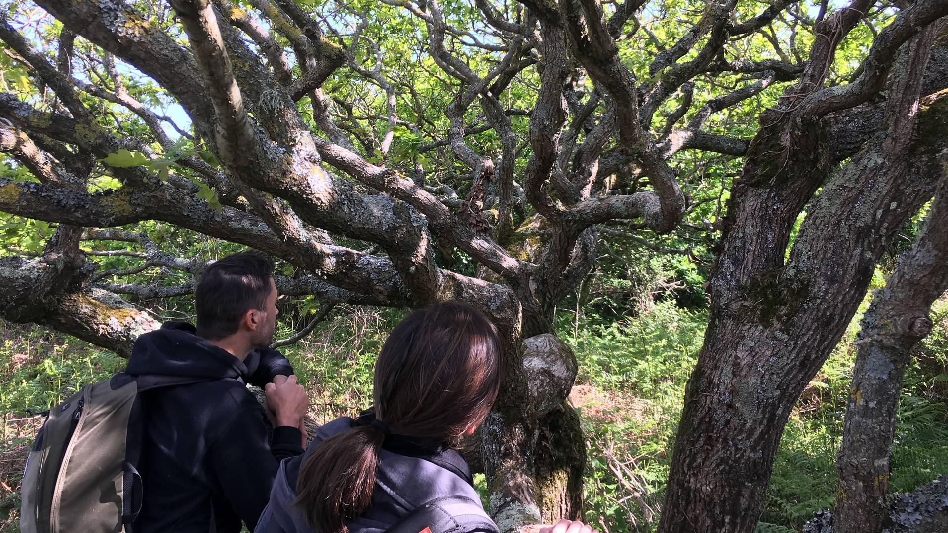 arbre carolles nature