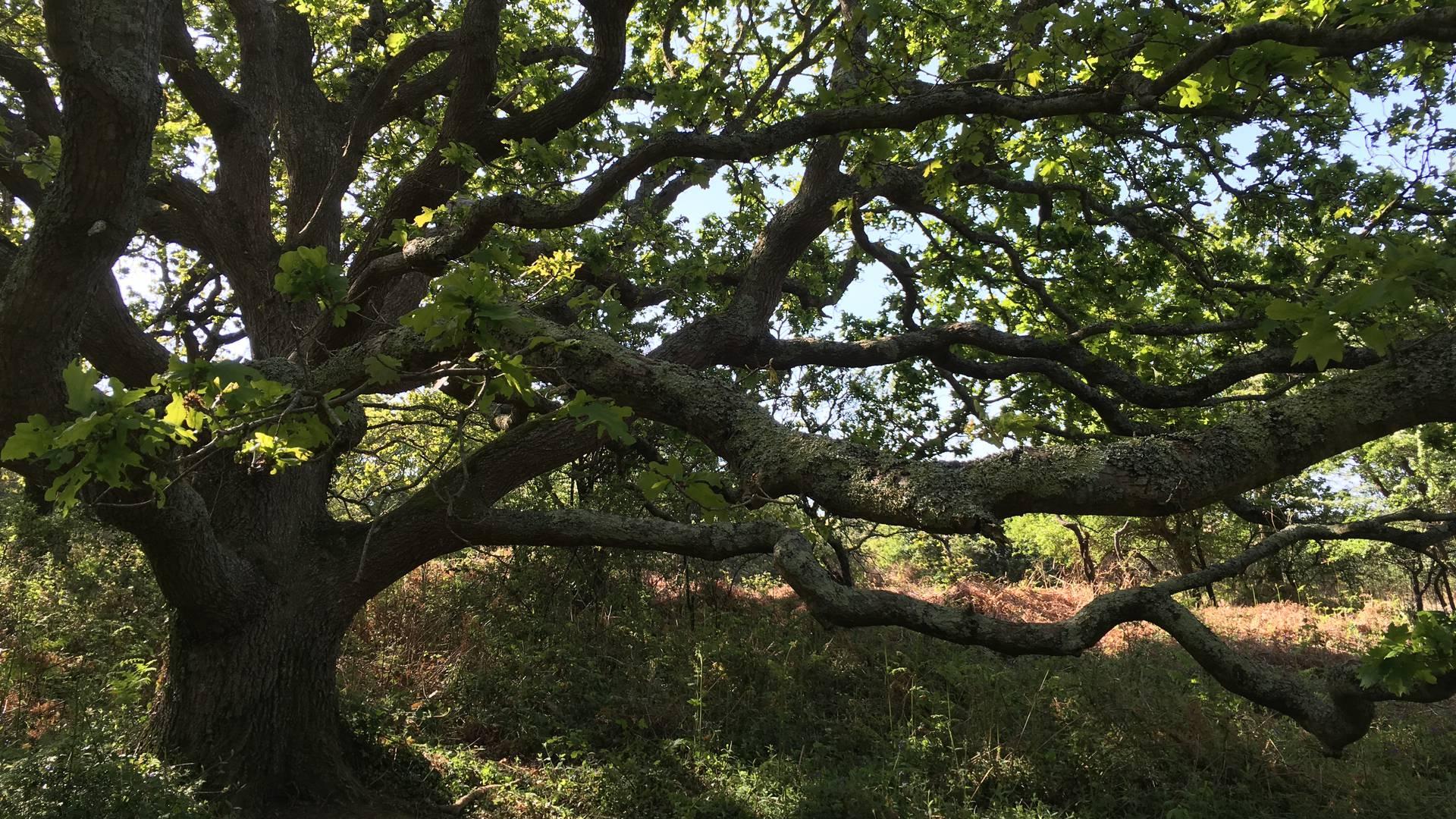 arbre nature carolles