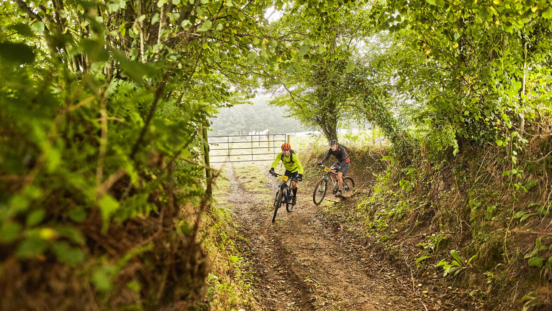 """Explore the """"bocage"""", the heart of the countryside"""