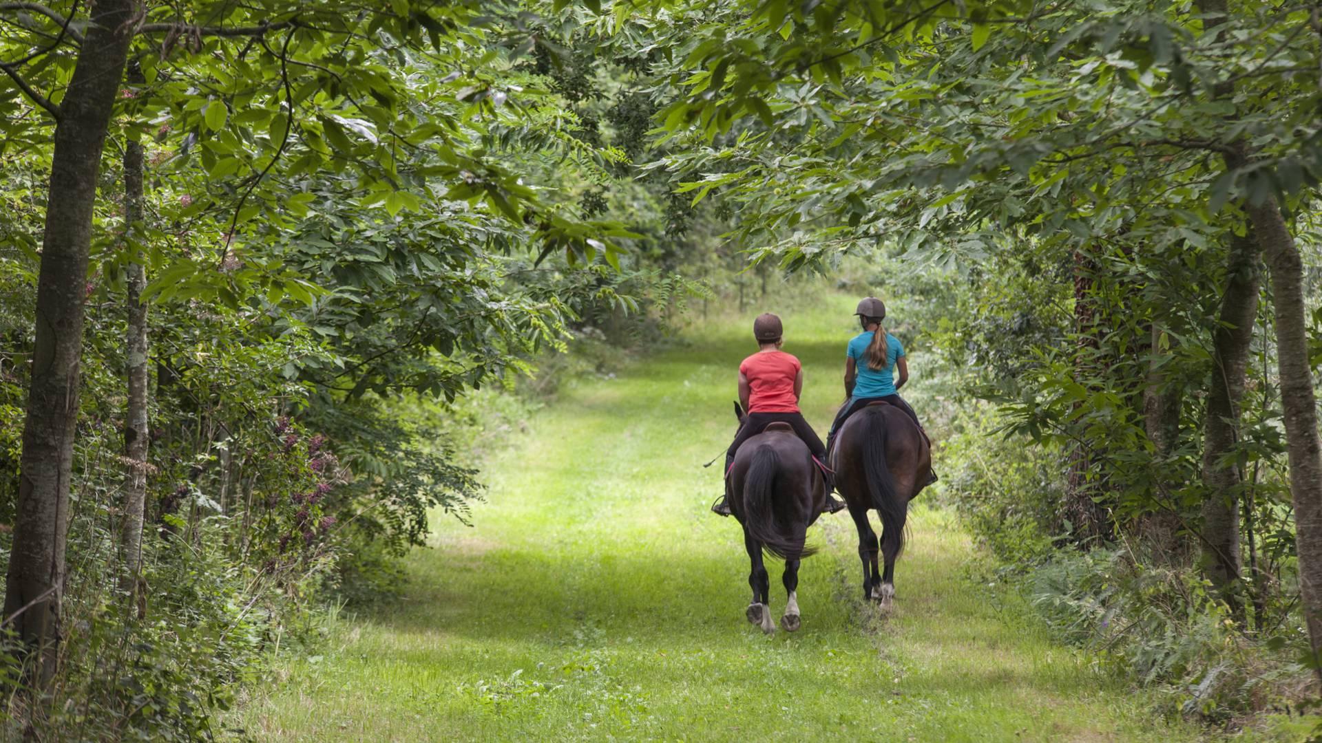 centre equestre cheval poney granville normandie