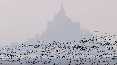 Birding Mont Saint-Michel