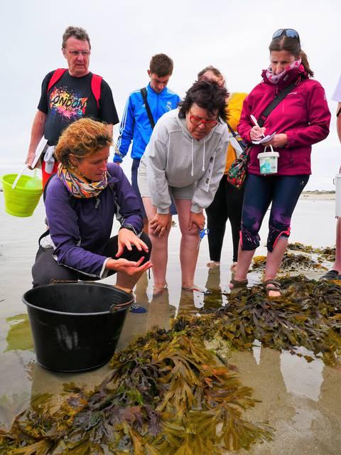 algues cuisine donville les bains