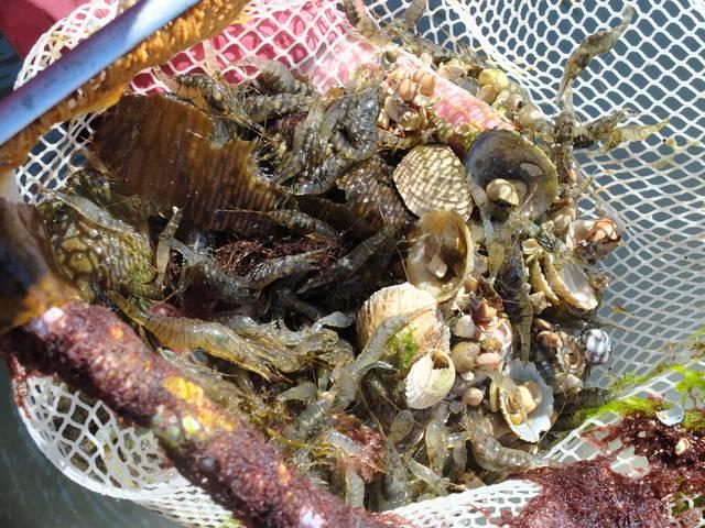 Chausey marée pêche