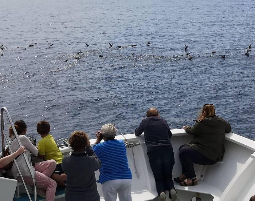 observateurs oiseaux marins