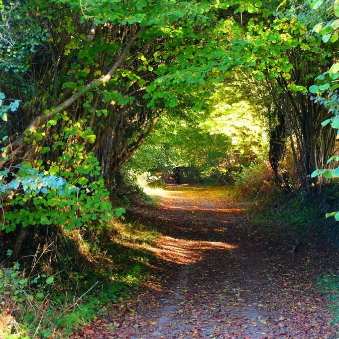 Chemins de Saint-Michel des Loups, randonnées à pied dans la Manche, destination granville terre et mer